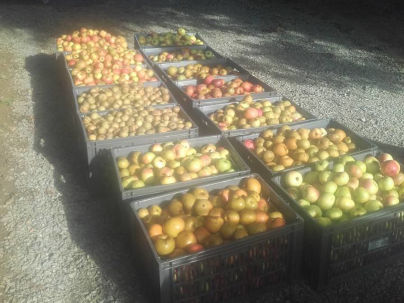 Cagettes de pommes - Mouvipress, pressoir mobile de fruits en Bretagne, Pays de la Loire et Normandie